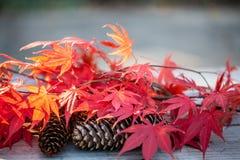 负面因素和槭树叶子 库存图片