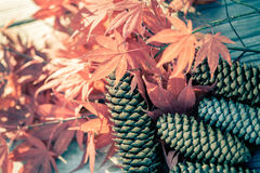 负面因素和槭树叶子 免版税库存图片