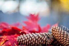 负面因素和槭树叶子 免版税库存照片