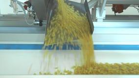 面团工厂和面团生产阶段 关闭从在现代食物生产的干通心面机器单元溢出 股票视频