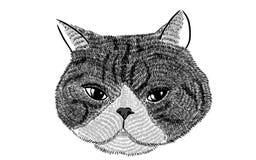 面孔猫的例证 免版税库存照片