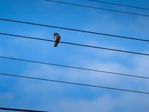 面对侧视图的小的鸟 免版税库存图片