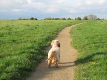 面对在道路下的狗 免版税库存图片