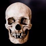 面对平直的关闭的头骨  库存照片