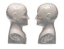 面对的两个颅相学头在白色背景 库存照片