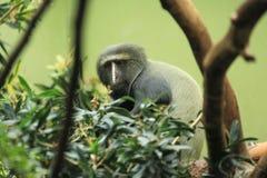 面对的猴子猫头鹰 库存照片