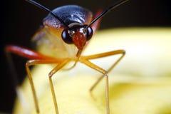 面对面与一只热带雨林花飞蛾 免版税图库摄影
