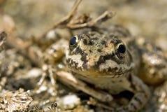 面带笑容面对青蛙 免版税库存照片