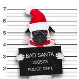 面部照片圣诞老人狗 库存照片