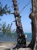 鞋子结构树 库存照片