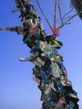 鞋子结构树 库存图片