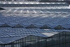 韦斯特兰,区域有很多温室 图库摄影