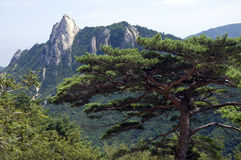 韩国国家公园seoraksan南部 库存图片
