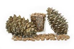 韩国杉木的锥体和坚果 免版税库存照片