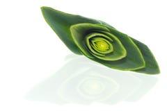 韭葱的横剖面 库存图片