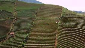 韭葱领域和农夫空中英尺长度  影视素材