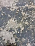 音乐会纹理地板00361 免版税库存图片