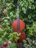 音乐在庭院里 免版税图库摄影