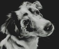 音量控制器小狗 免版税图库摄影