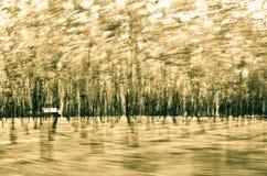 页可怕森林种植园 免版税图库摄影