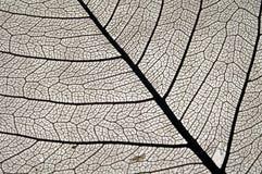 页结构树 免版税库存照片