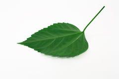 页结构树 图库摄影