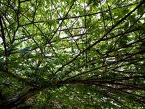 顶上树的分支  图库摄影