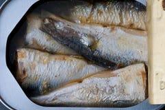 顶上的沙丁鱼 免版税库存图片