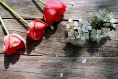 顶上的观点的在土气被风化的木板的春天红色郁金香 您的文本的空的空间 免版税库存图片