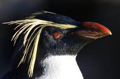 顶头企鹅纵向rockhopper 库存图片