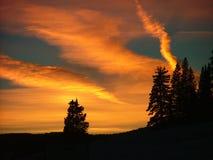 顶头蜥蜴通过日落冬天 免版税库存图片