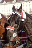 顶头ot与马眼罩的一匹fiaker马在维也纳 图库摄影