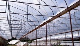 顶房顶植物产业摘要背景的托儿所农场 免版税图库摄影