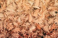 顶视图下落的橡木叶子 图库摄影