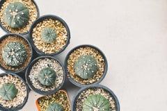 顶视图在罐的一点美丽的仙人掌 图库摄影