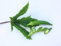 顶视图新鲜秋葵果子Abelmoschus esculentus在绿色叶子和切片在白色背景 库存图片