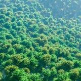 顶视图森林 免版税库存照片