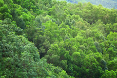 从顶视图的森林 免版税库存照片