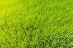 顶视图绿色领域的粮食作物 免版税库存图片