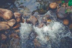 顶视图美丽的小瀑布在有流经石头的水小河的河围拢与绿色树 库存图片