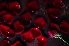 顶视图舱内甲板在黑暗的背景放置红色玫瑰花瓣 拉丁文,激情概念 红色上升了 库存图片