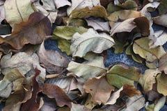 顶视图,看在许多棕色绿的叶子下射击在地板上的 免版税库存图片
