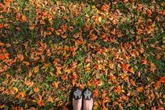 顶视图 在拙劣的柚木树的平的鞋子在早晨光研了 库存图片