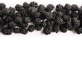 顶视图 在白色背景的成熟黑莓 在图象边界的莓果与拷贝空间的文本的 库存照片