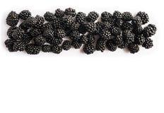 顶视图 在白色背景的成熟黑莓 在图象边界的莓果与拷贝空间的文本的 免版税库存图片