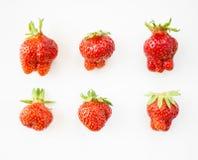 顶视图 在白色背景隔绝的套草莓 非标准形状草莓在a的在白色背景 成熟stra 免版税库存照片