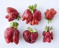 顶视图 在白色背景隔绝的套草莓 非标准形状草莓在a的在白色背景 成熟stra 免版税图库摄影