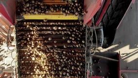 顶视图 排序在农场的土豆的特别机械化的过程 土豆在传送带被卸载,并且工作者是 股票视频