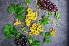 顶视图结构的各种各样的葡萄:红色,白色和黑莓果和绿色叶子有水下落的在黑暗的具体backgr 免版税库存照片