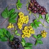 顶视图结构的各种各样的葡萄:红色,白色和黑莓果和绿色叶子有水下落的在黑暗的具体backgr 库存照片